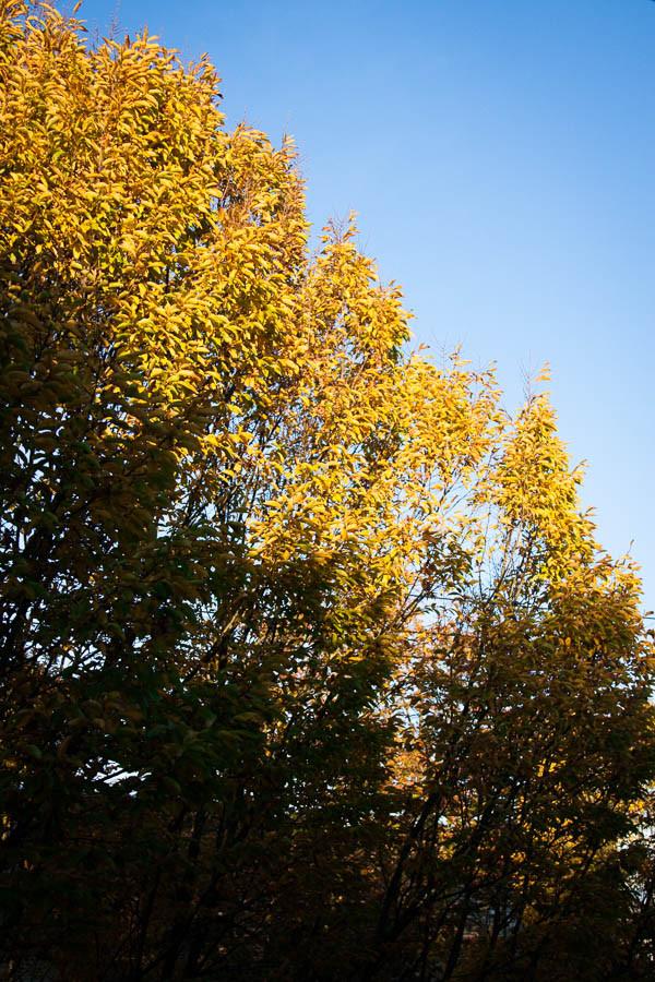 Morning light on autumn trees