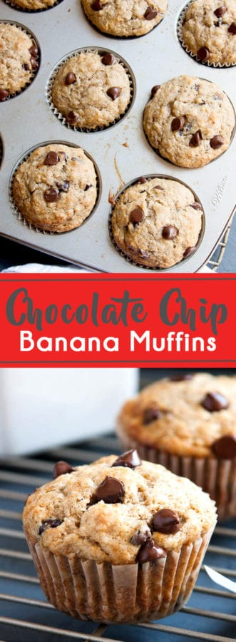 The best Chocolate Chip Banana Muffins! This recipe uses 3 bananas for maximum flavour and sour cream to keep them super moist!