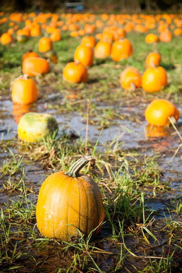 pumpkin-patch-2016-1-of-1